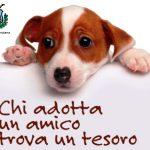 adotta-un-cane-Comune di Manziana